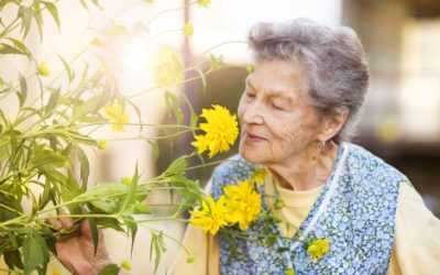 What Caregivers Should Know about Seniors and Allergy Medications